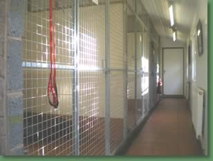 A view inside the kennels